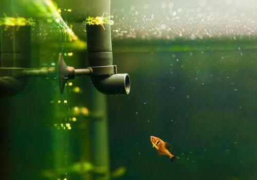 4 types de filtres idéaux pour les aquariums