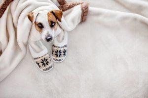 L'hypothermie chez les chiens