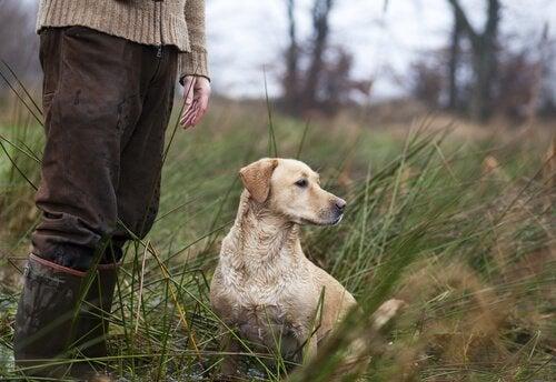 Des noms pour chiens de chasse