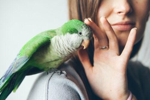 Le déparasitage de vos oiseaux domestiques