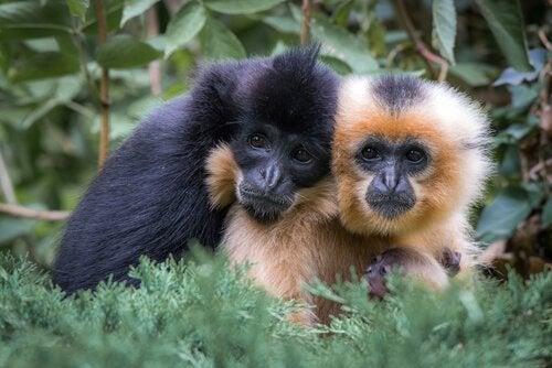 5 espèces monogames qui défient notre conception des relations de couple