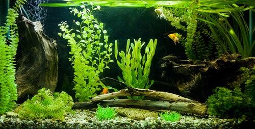 Les filtres dépendent de la taille des aquariums