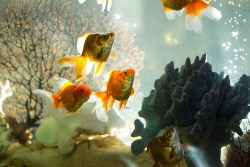 Les différents types de filtres pour les aquariums