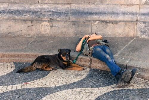 5 magnifiques itinéraires pour voyager en Europe avec votre chien