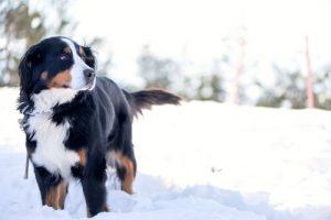 voyager avec votre chien à Zurich