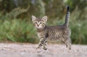 chats de l'Alhambra