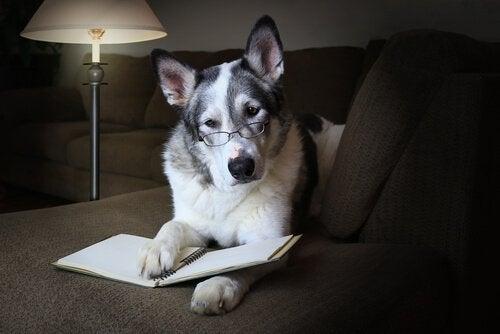 Comment améliorer les compétences sociales du chien