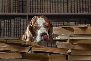 curiosités scientifiques sur les chiens