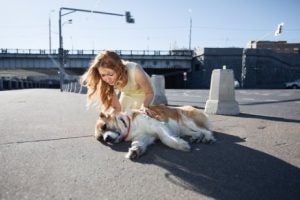 aider son chien à se rafraîchir en été en l'emmenant à la rivière