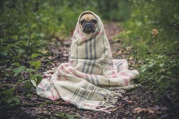 Prévention et soins de la grippe chez les chiens