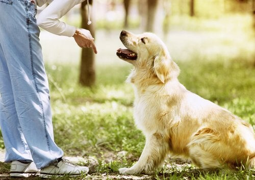 Erreurs lors du dressage d'un chien
