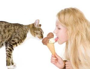rafraîchir votre chat en été avec des glaces