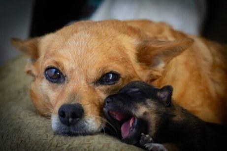 instinct maternel animal