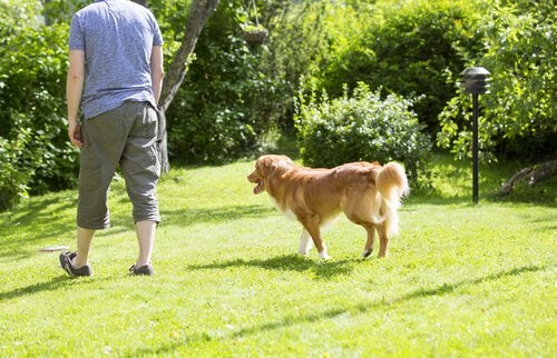 Pourquoi les chiens nous suivent partout ?
