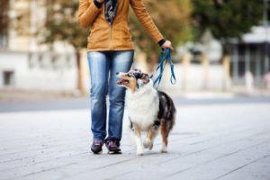 femme qui sort promener son chien