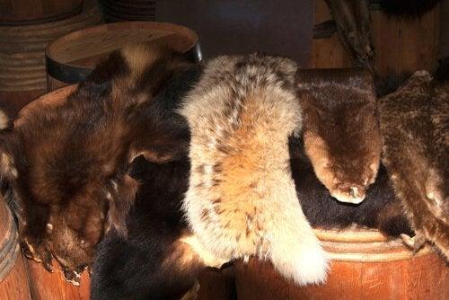 Le commerce de fourrures va enfin cesser