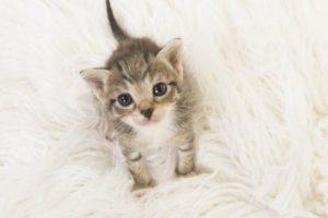 chaton sevré sur un tapis