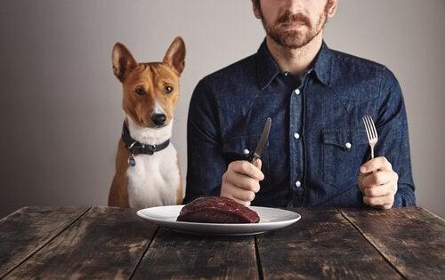 L'importance des protéines chez les chiens