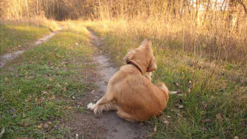 Allergies canines : causes et symptômes