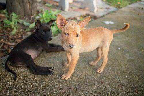 Les animaux de compagnie qui souffrent du manque de nourriture au Vénézuela