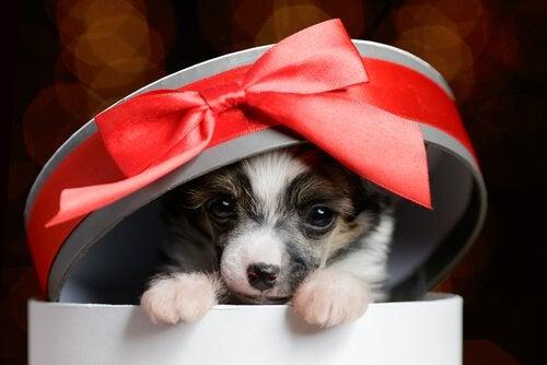 4 conseils pour offrir un animal domestique en cadeau