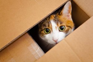 chat caché dans une boite en carton