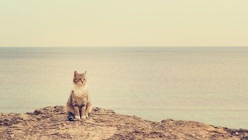 plages pour chats
