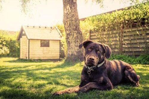 14 conseils pour construire une niche à votre chien