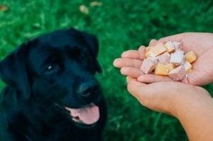 changements de nourriture chez le chien