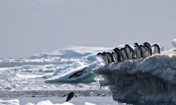 Le cimetière de manchots en Antarctique
