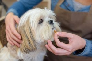 le Claritin chez les chiens