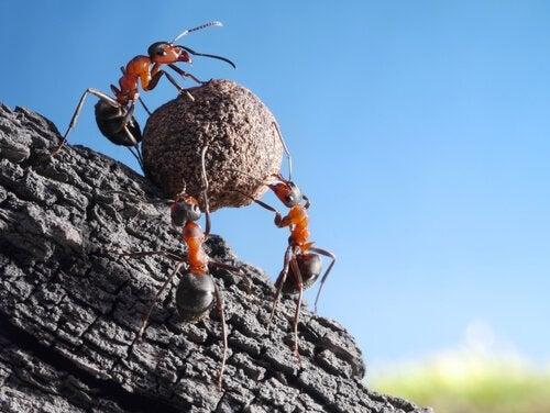 Curiosités sur les fourmis