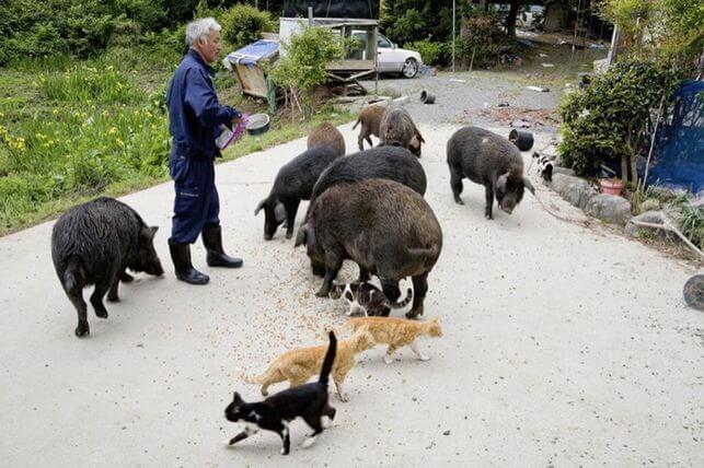 Le gardien des animaux de Fukushima