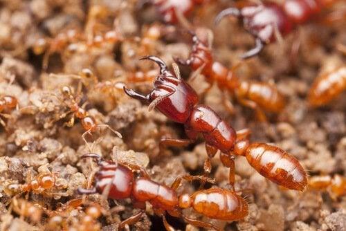 Les insectes tueurs les plus mortels au monde