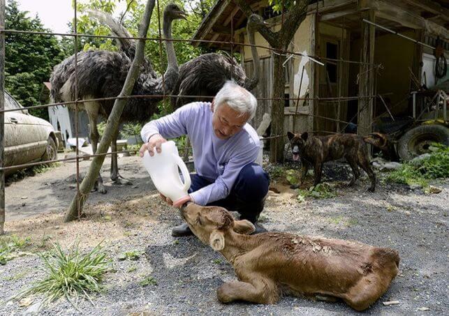 animaux de Fukushima