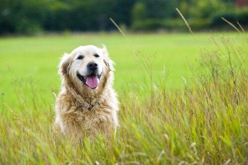 Adresser une lettre à son chien décédé