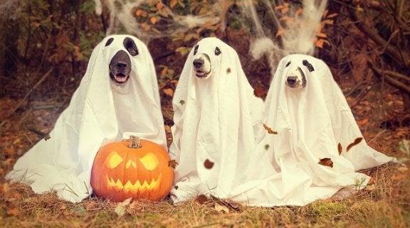 6 maladies du chien en automne