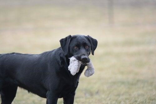 7 objets dangereux pour votre animal