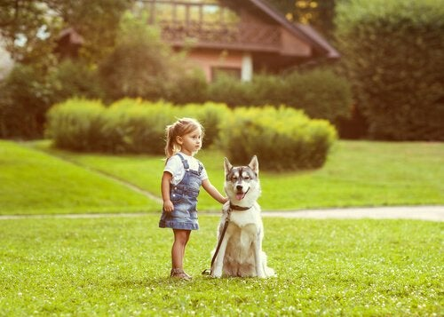Le sens de l'orientation chez les chiens