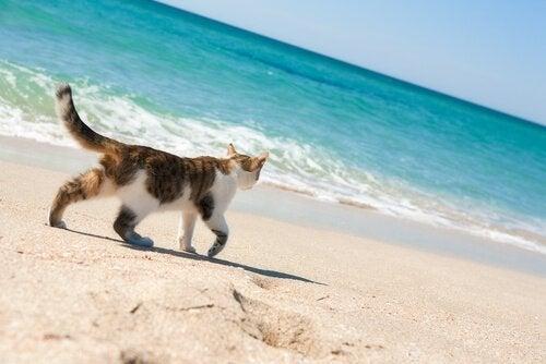 Existe-t-il des plages pour chats ?