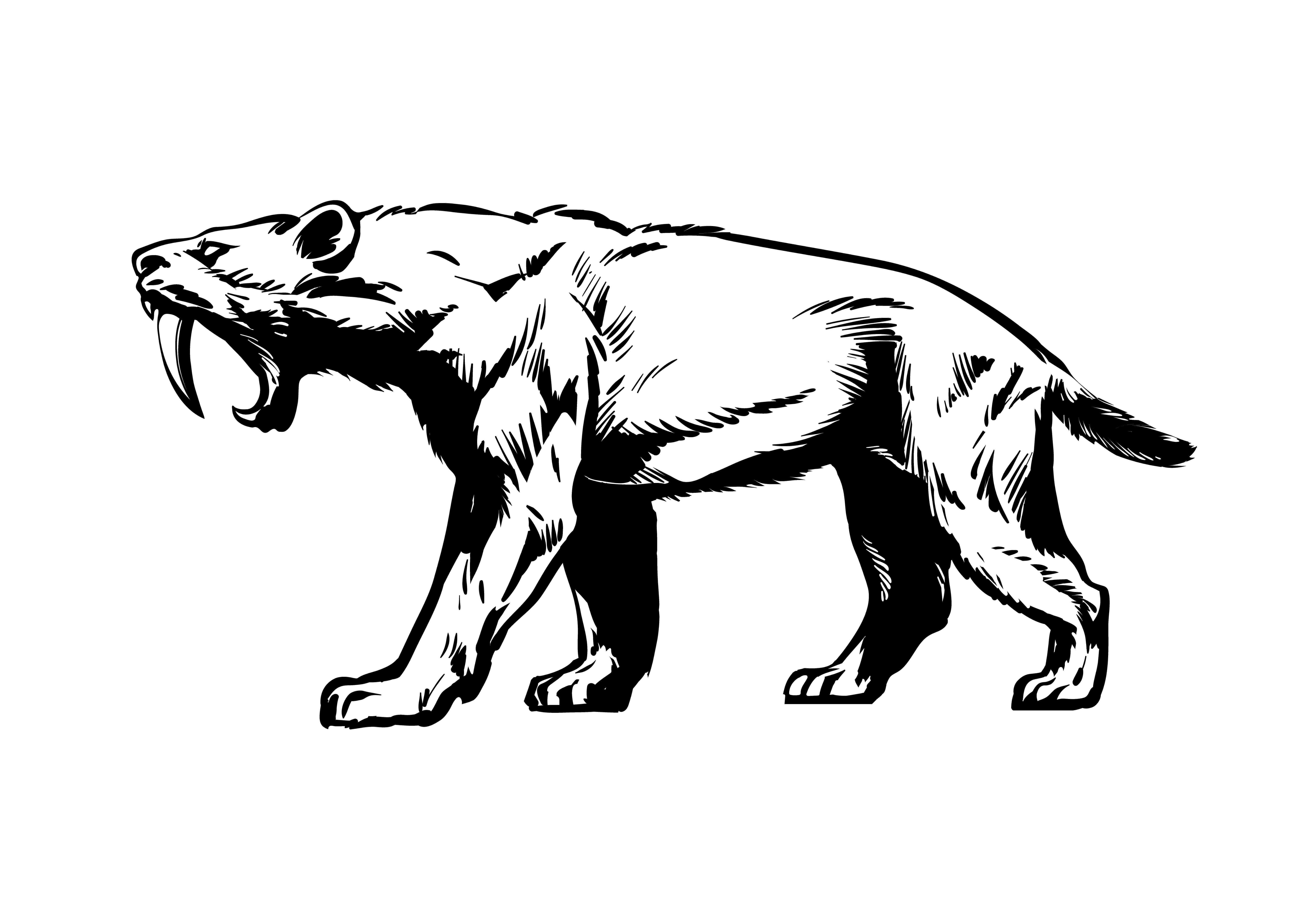 les félidés : tigre au dents de sabre