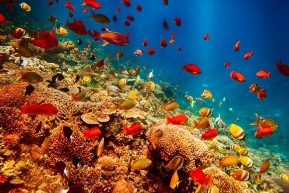8 animaux marins les plus rares au monde