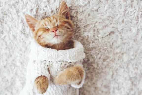 Votre chat n'aime pas le froid