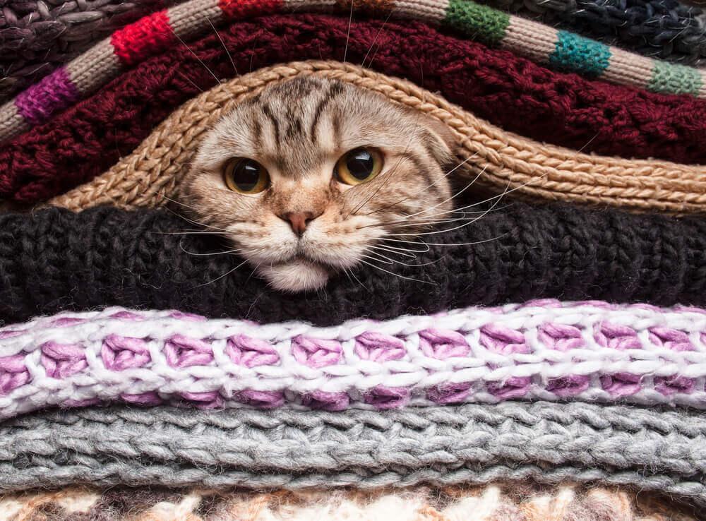 chat qui n'aime pas le froid