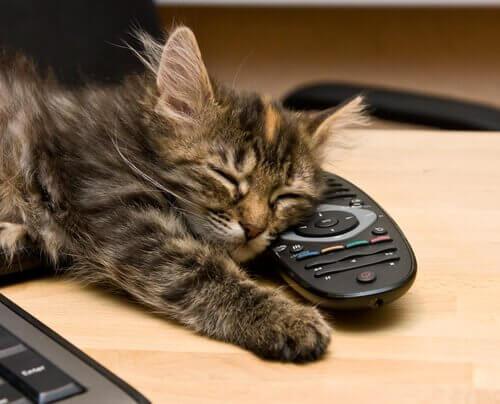 les chats perçoivent les mauvaises énergies