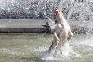 les chiens peuvent-ils transpirer ?