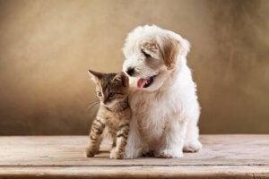 adopter un chat quand on a déjà un chien