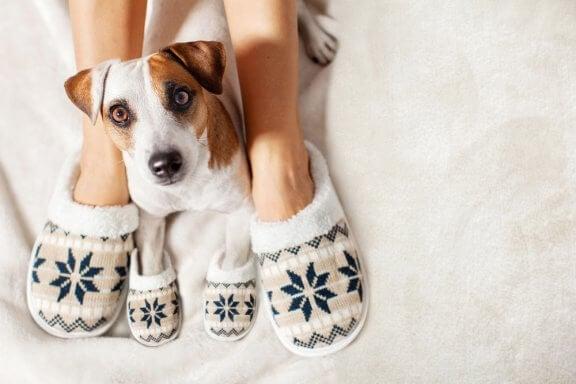 Comment garder votre animal de compagnie au chaud en hiver