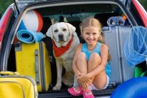 comment éviter les vertiges du chien en voiture
