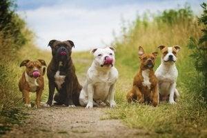 chiens célèbres dans la littérature